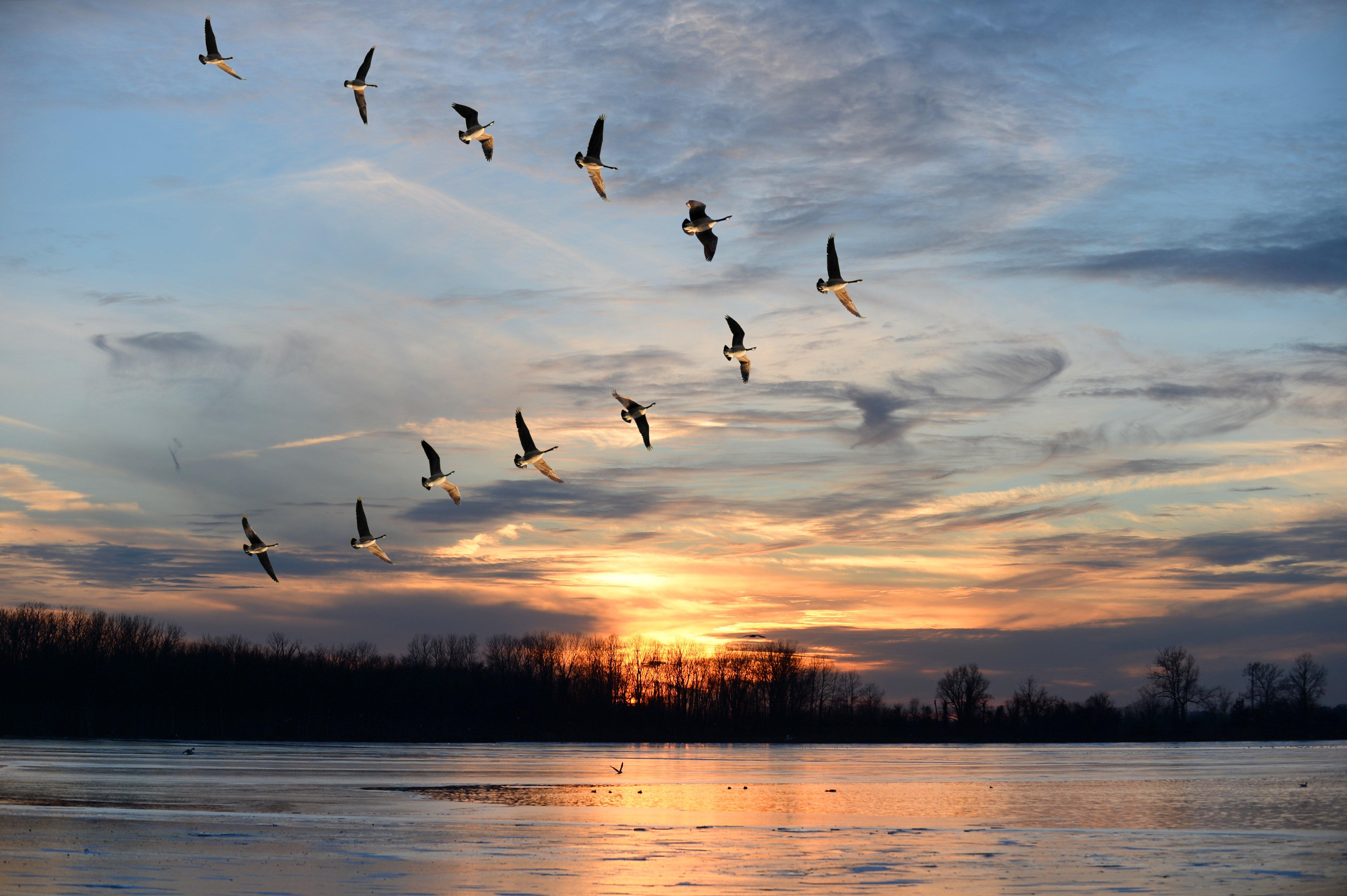 birds_AdobeStock_62110777.jpg
