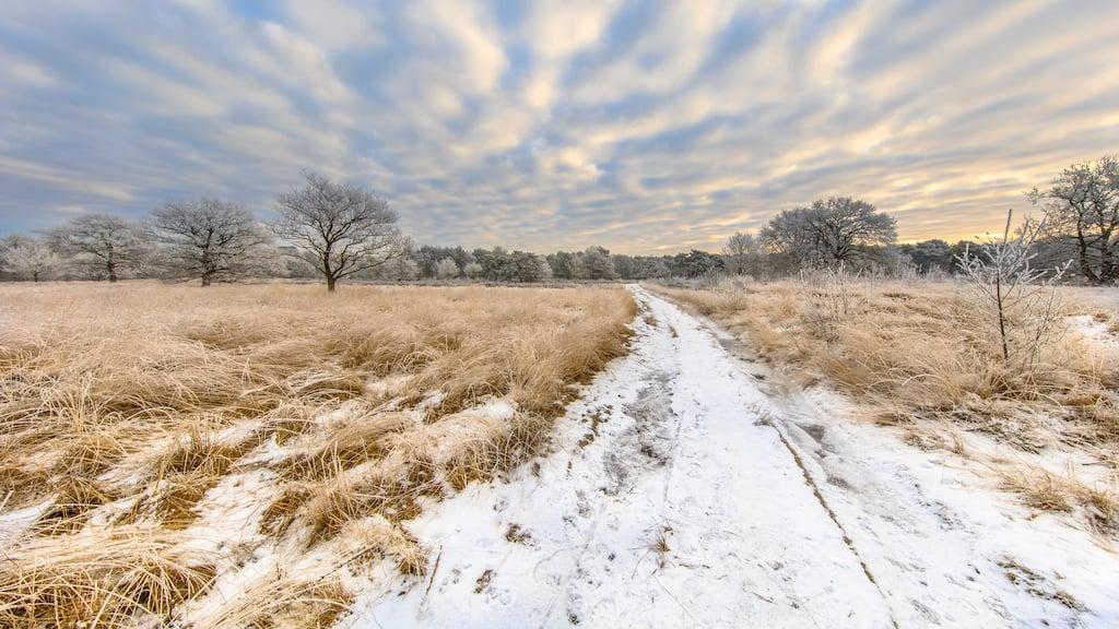 path-through-winter-heathland-landscape-panorama-a-PRKJBMZ